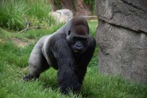 Los Angeles Zoo