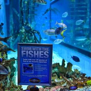 Swim With The Fish RumFish Grill